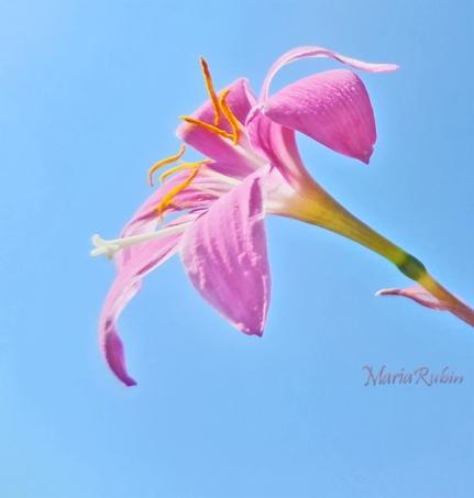 flowerfray