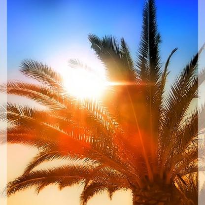palm_tree
