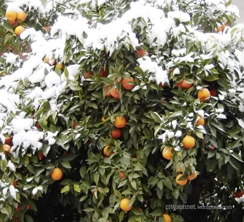 snoworange