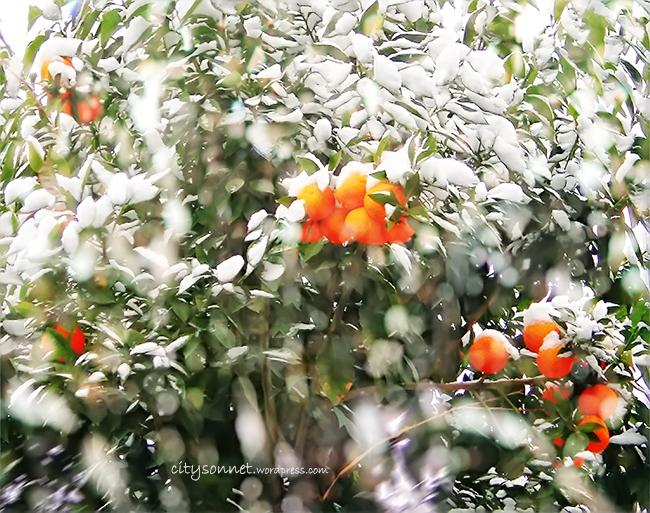 orangesnow
