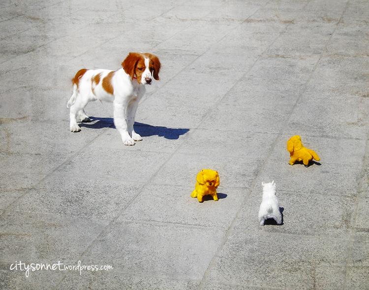 dogToys