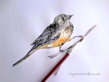 birdd-painting