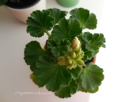 flowerbud11