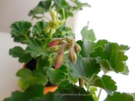 flowerbud4