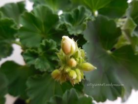 flowerbud9