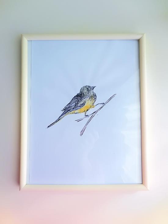 framebird