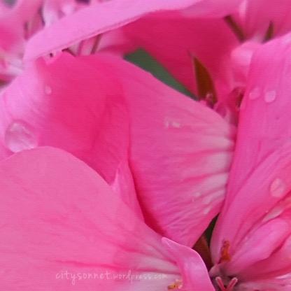 petalsart1