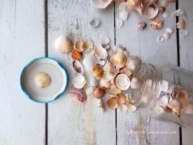 seashells4