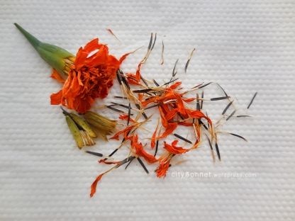 marigoldseeds