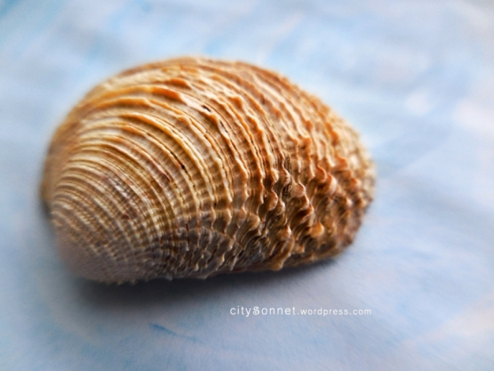 seashell1