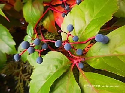 berriestree