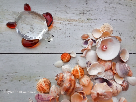 seashellsturtle