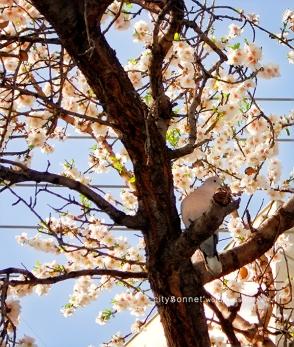 almondbird