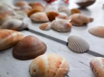shellssea