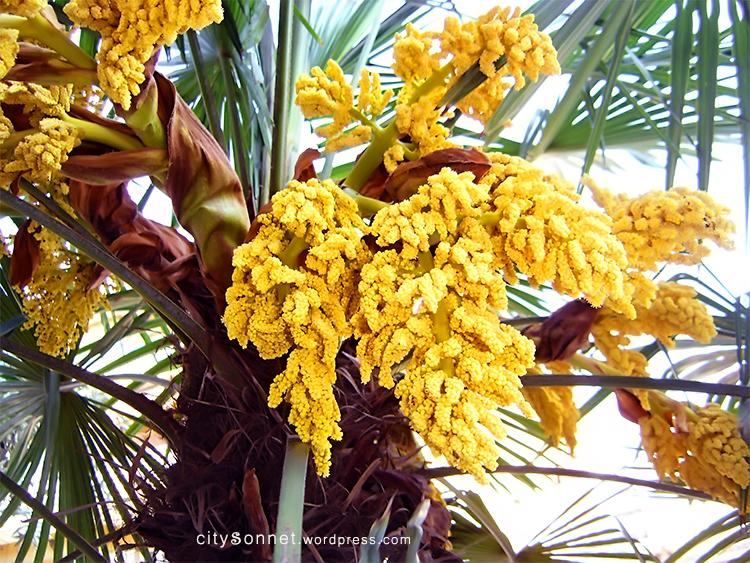 Palm flower mightylinksfo