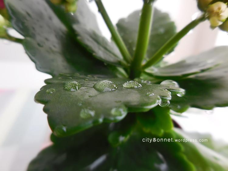 raindropsleaves