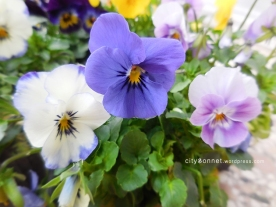 bluebellviolet