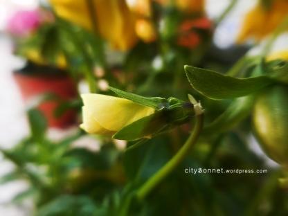yellowbuds
