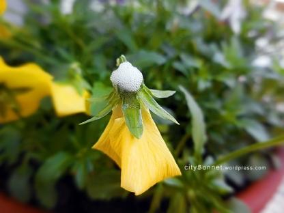 flowerfoam