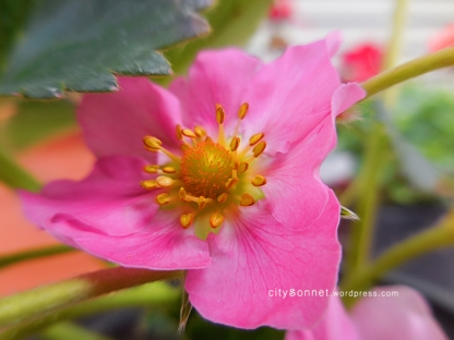 flowerstrawberry