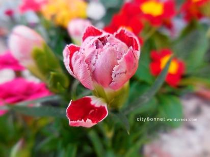 petalcarnation