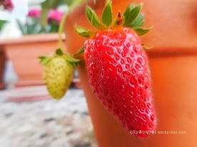 redstrawberry