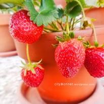 strawberriesred
