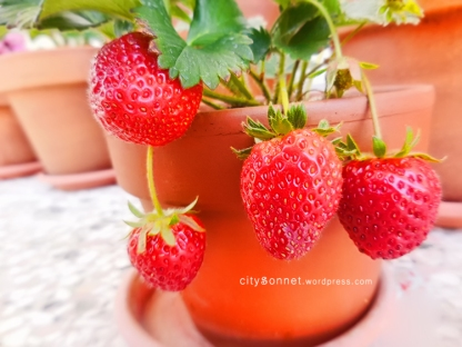 strawberriesred