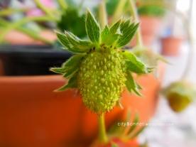 strawberrygreen