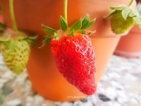 strawberryred