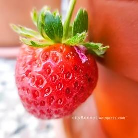 strawberryreds