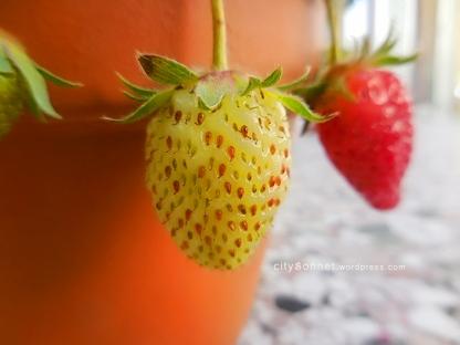 strawberryyellow