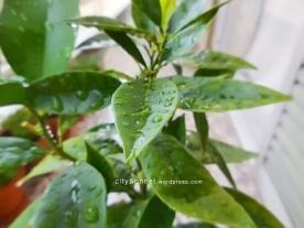 raindroprsorange