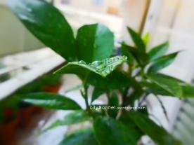 rainleaves