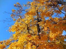 autumntree1