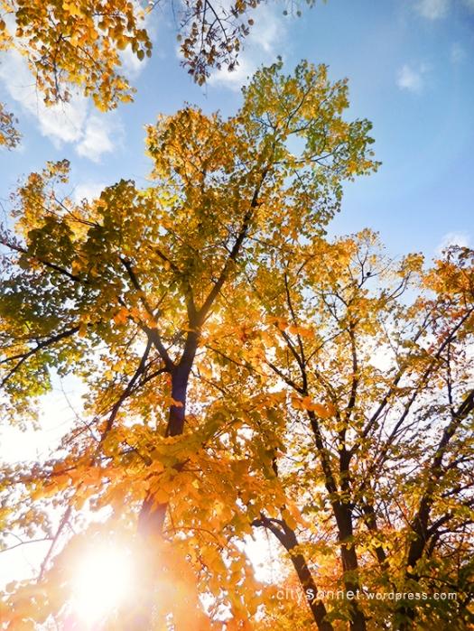 autumntree4