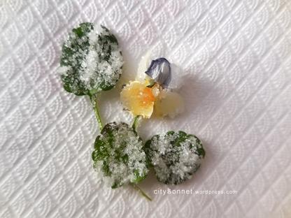 sugarflower
