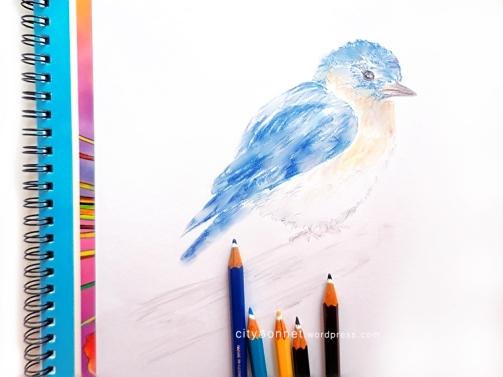 birdpencil4
