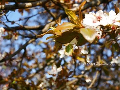 blossom4