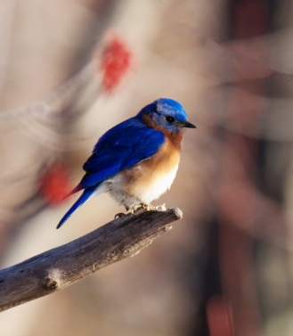 bluebird1_9mar_blog