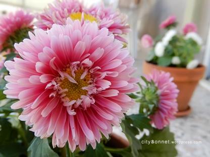 pinkflower5