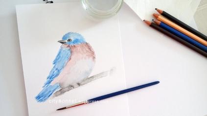 birddraw