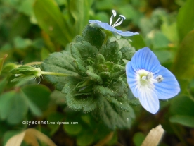 blueflower1
