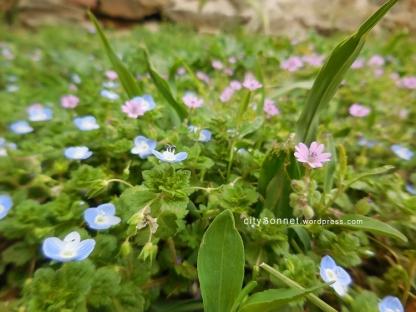 blueflower3