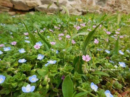 blueflower4