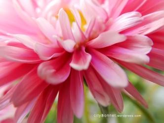 flowerpink1