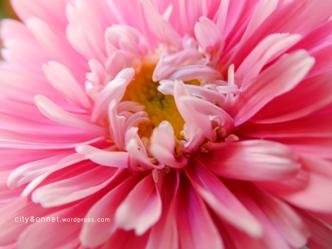 flowerpink2
