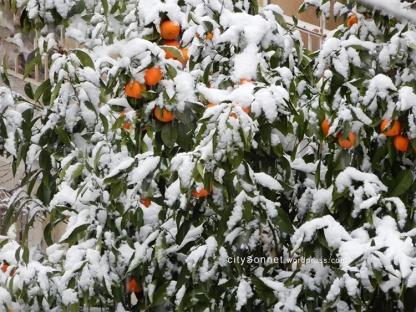 orangesnow1