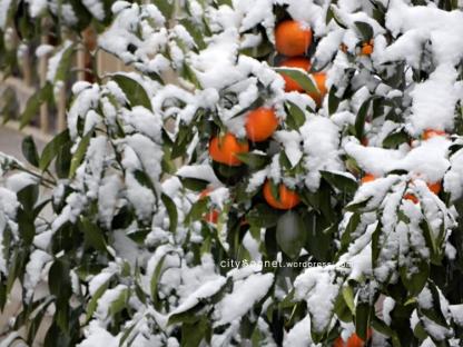 orangesnow2