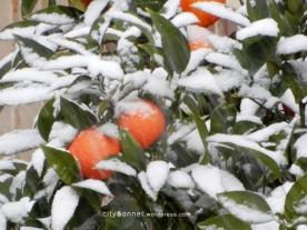 orangessnow1